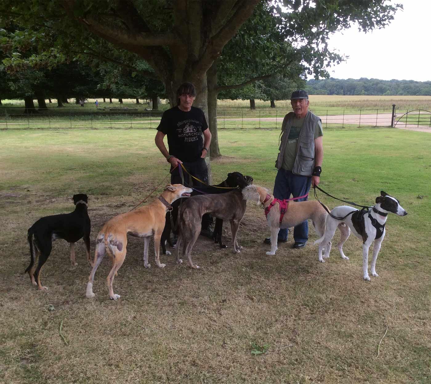 Greyhounds Walking